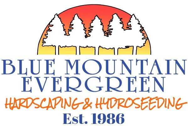 Blue Mountain Evergreen